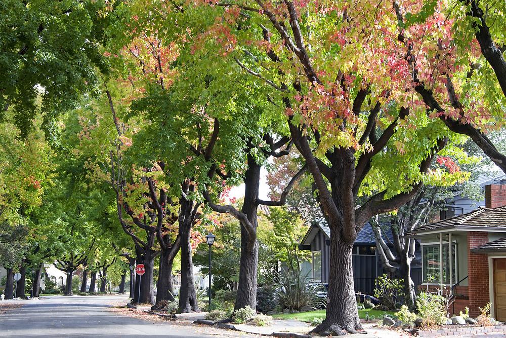 neighborhood, street, row of homes, houses, residential