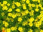 lemon gem.jpg