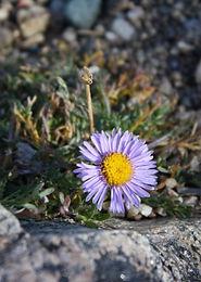 Hopeful Flower