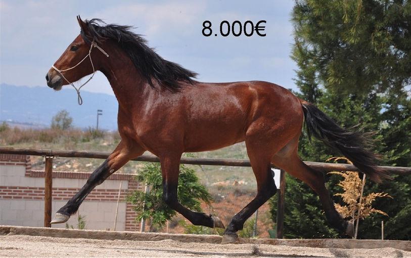 vente chevaux pre pure race espagnole iberiques cde. Black Bedroom Furniture Sets. Home Design Ideas