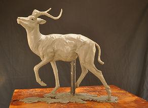 wax model