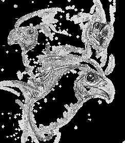 Go-away Birds Sketch