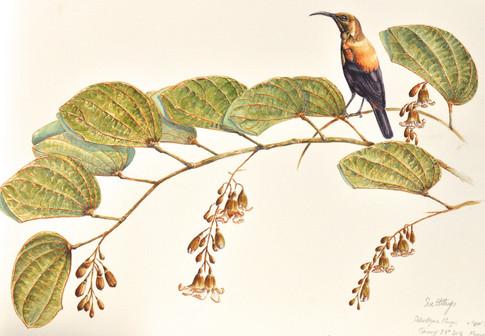 Paintings Water colour 2007-2014 Magangwe-2.jpg