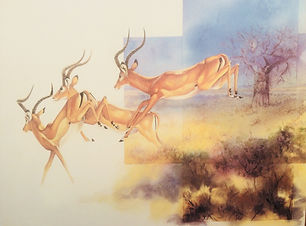 leaping impala watercolour..jpg