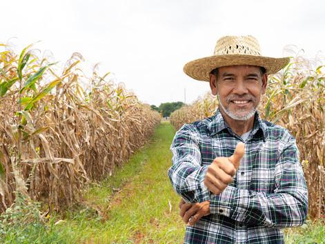 A segurança e a saúde dos trabalhadores rurais segundo a Norma Regulamentadora nº 31