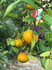 Fruit season.jpg