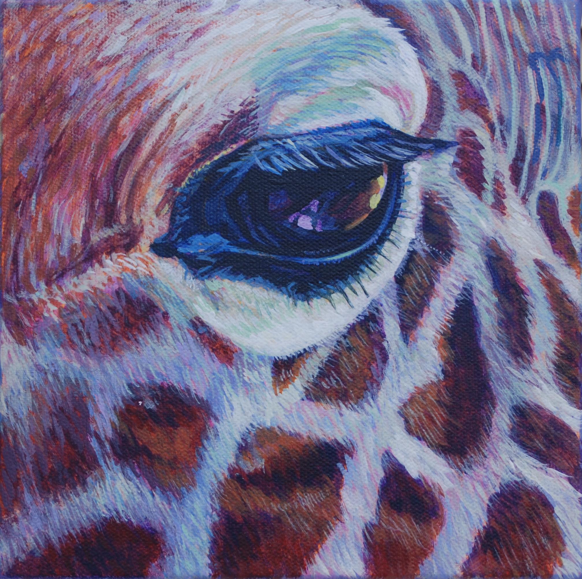 Giraffe eye