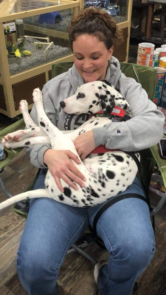 Dalmatian dog with foster mom