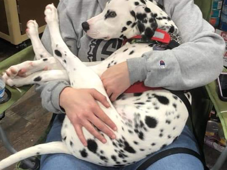 A pair of pups