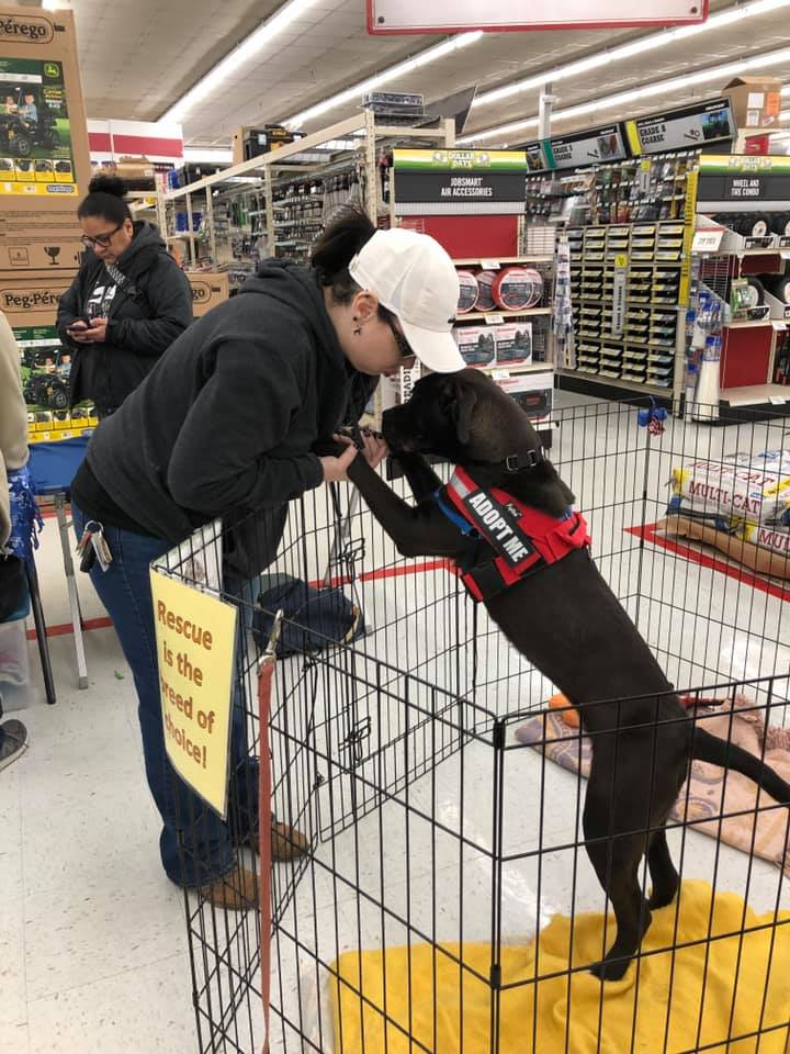 Volunteer kissing dog