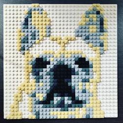 I am a brick French bulldog _Size_ 26x2