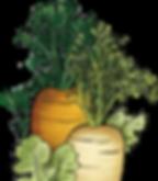 details-carottes.png