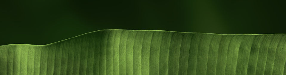 this is an asethetic picture of a leaf