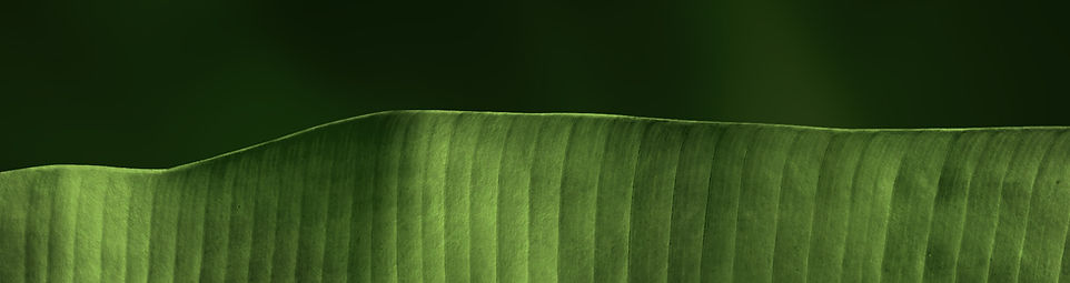 aesthetic picture to make the website appealing. this image is a leaf