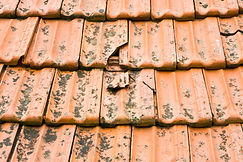 Pest control - cracked roof lets in bird