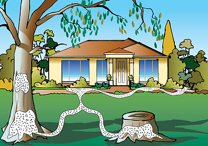 Termite+and+House+drawing.png
