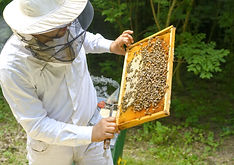 Bee Treatment - ring a bee keeper to see