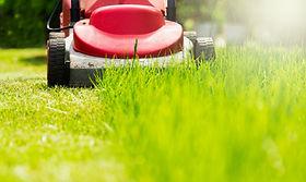 Flea Control - cut lawn short.jpg
