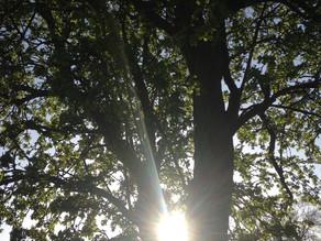 Holding The Light Tree Teaching