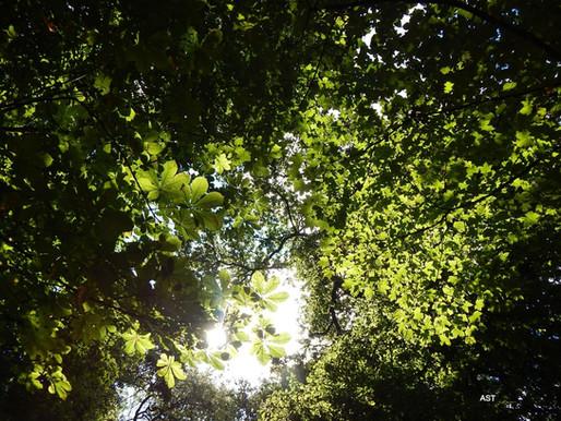 Changing Frames Tree Teaching