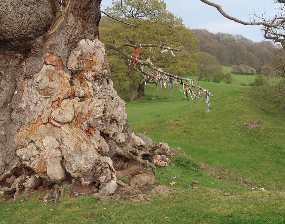 sacred oak tree on Raggedstone Hill