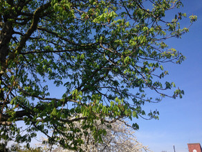 Breathing In - Tree Teaching