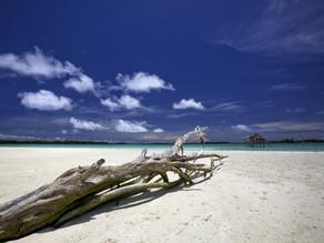 Trees Saved Lives From Tsunami on Biak Island, Indonesia