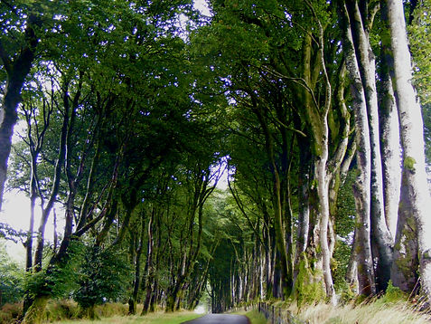 Beech Road To Stories by Amanda Vesty at