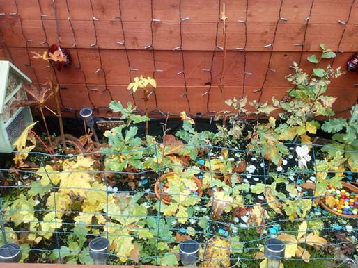 Tree Planting Week