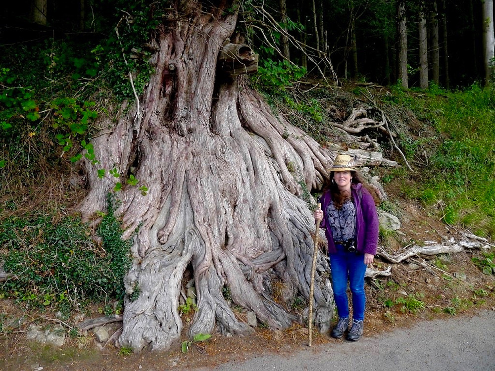 Amanda C Vesty with Ancient Yew Tree