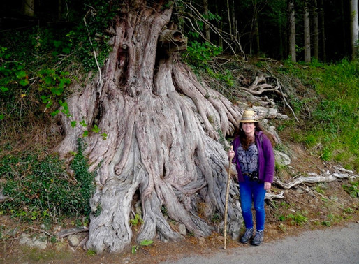 Rooted Soul Reckoning Part 1 - A Years' Beginning. Teaching With Trees