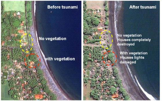 Before and after aerial photographs showing how trees protected houses from a tsunami