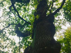 Fibro, Trees and Me