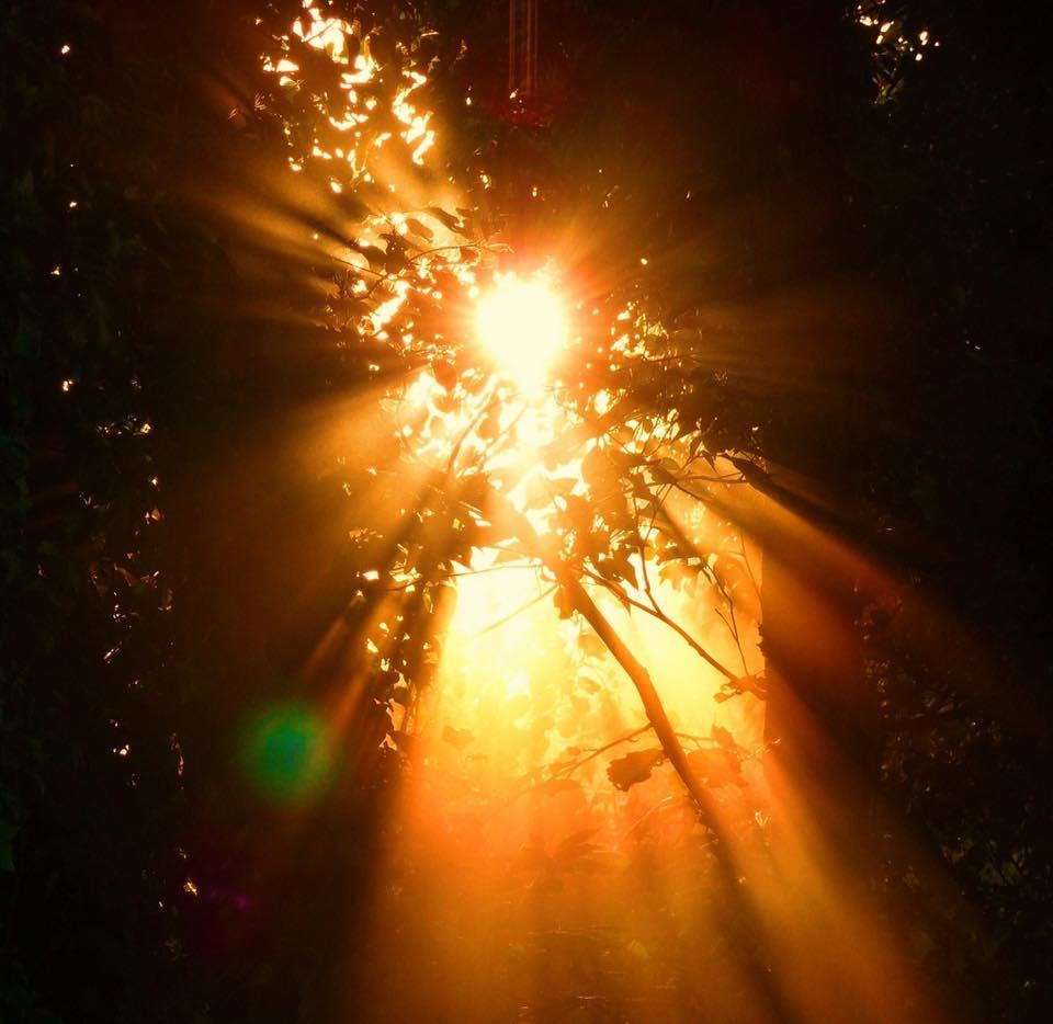 Solstice Dawn through trees