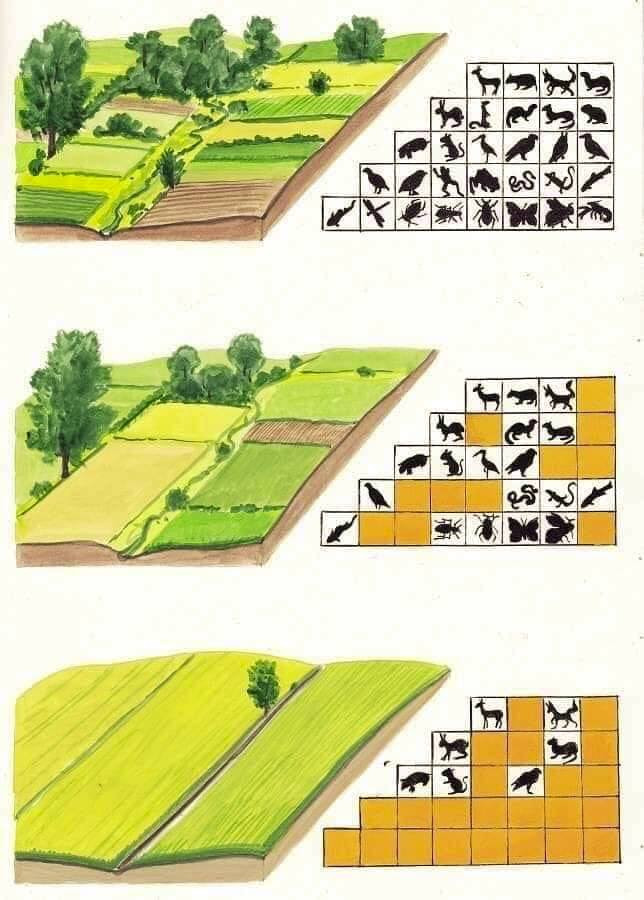 Impact of modern agriculture on ecology