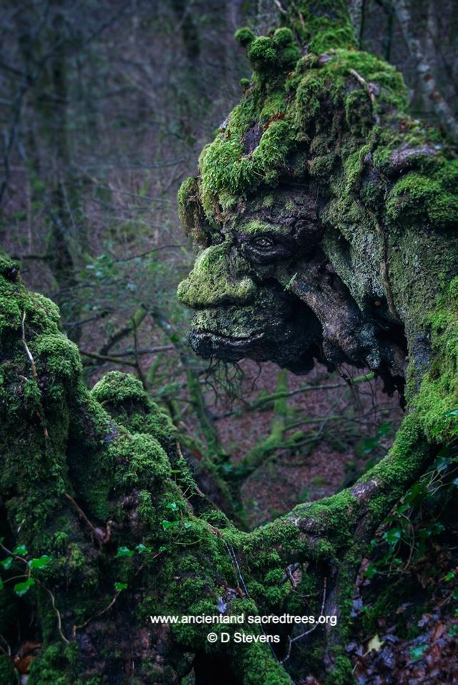 anthropomorphic tree face