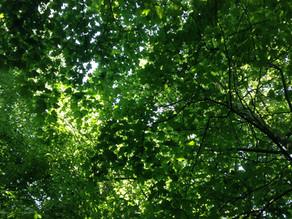 Canopy Tree Teaching