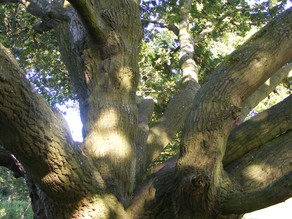 Tree Tours