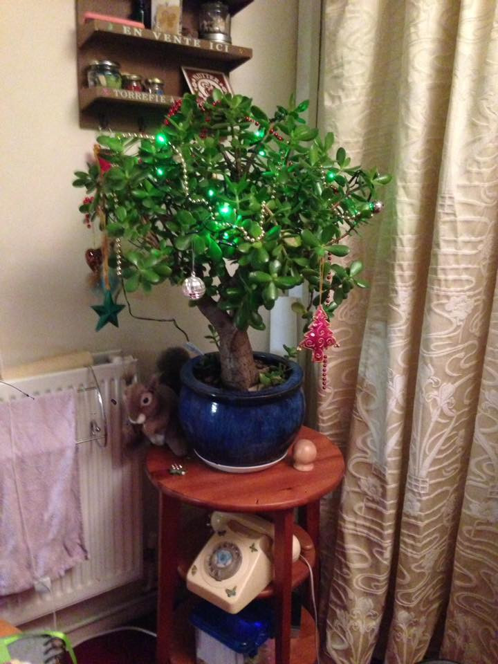 Christmas Chinese money tree