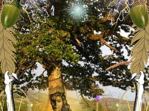 Midsummer Oak Dream