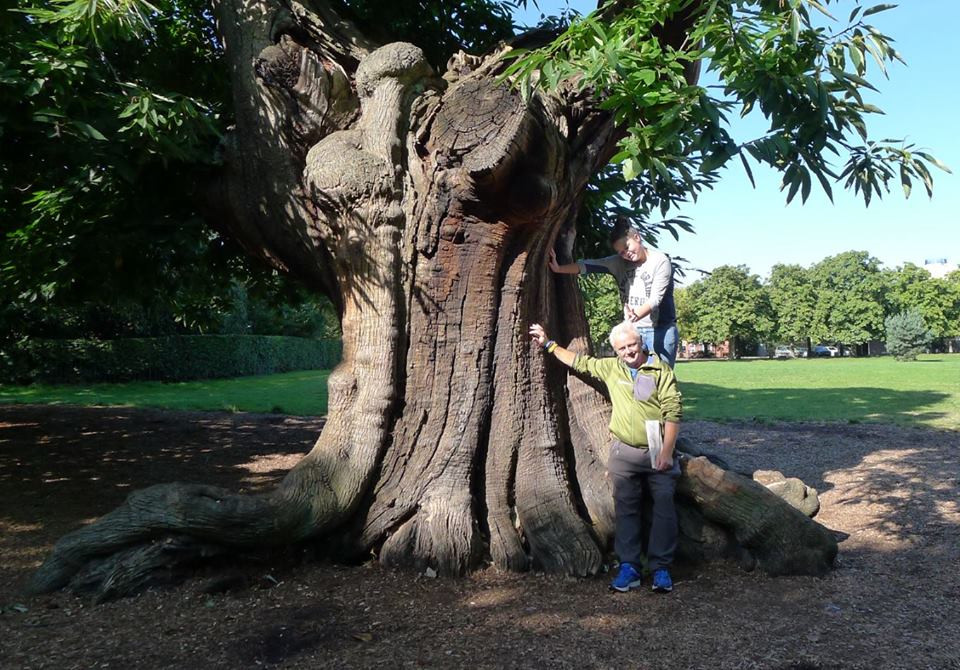 Greenwich Park sweet chestnut Rob McBride Ancient and scared trees