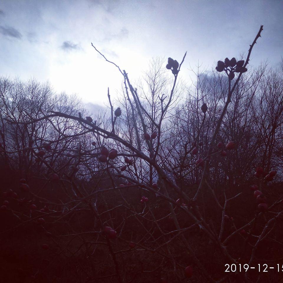Winter walk winter trees