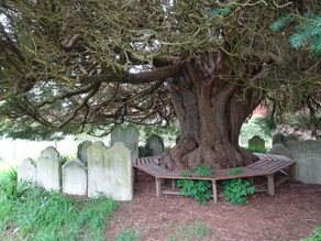Honouring The Trees Along The Spine of Albion