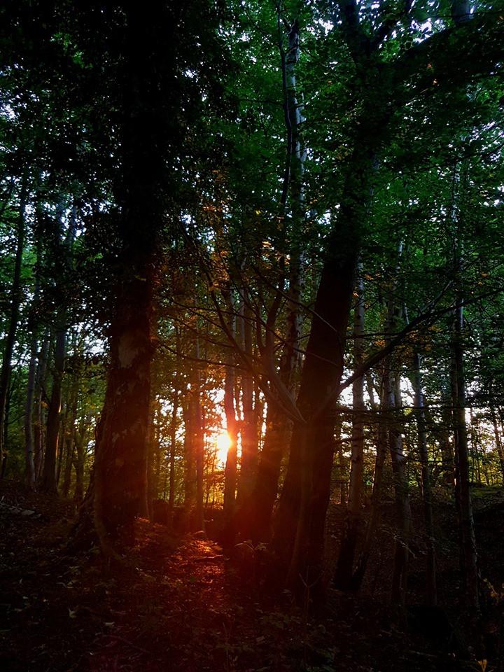 Morning solstice thru trees