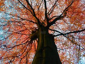 Colour Me Beautiful, Autumn Tree Teaching