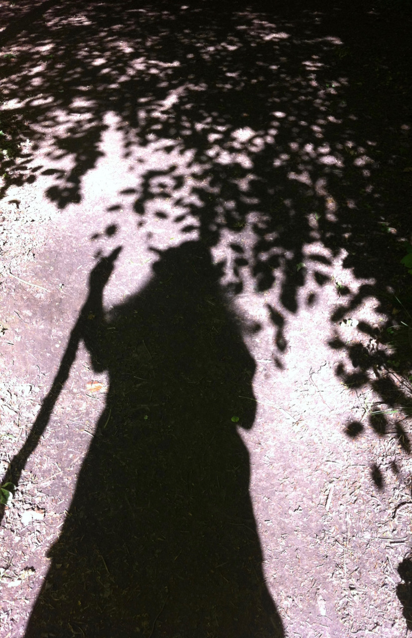 Shadow of human and trees. Living and journeying with trees. By Amanda C Vesty