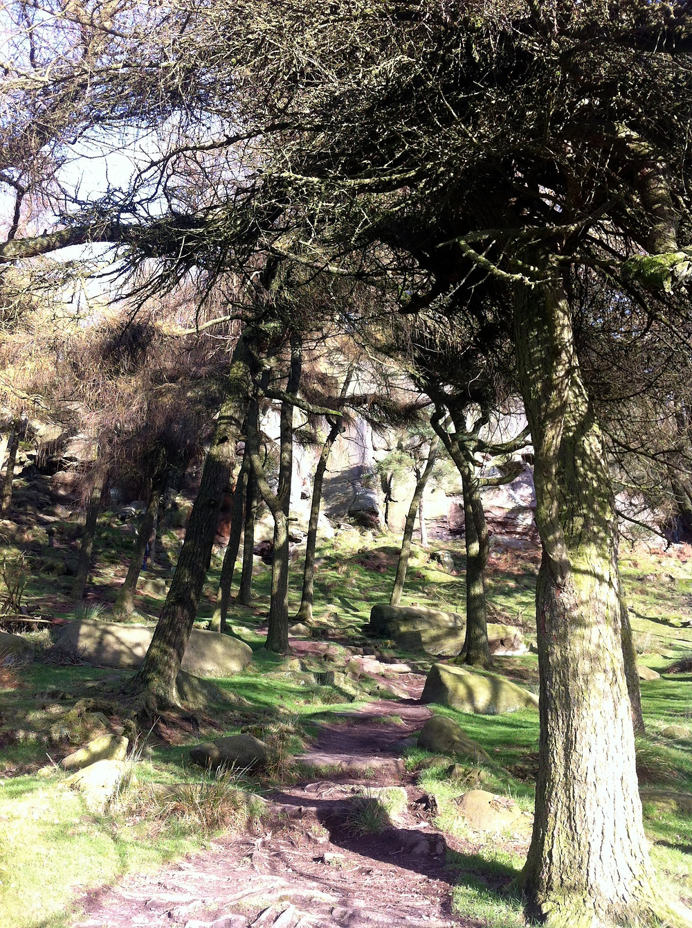 Pathway through the trees at the Roaches - Ancient and Sacred Trees