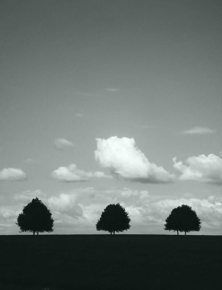 social distanced trees in a row