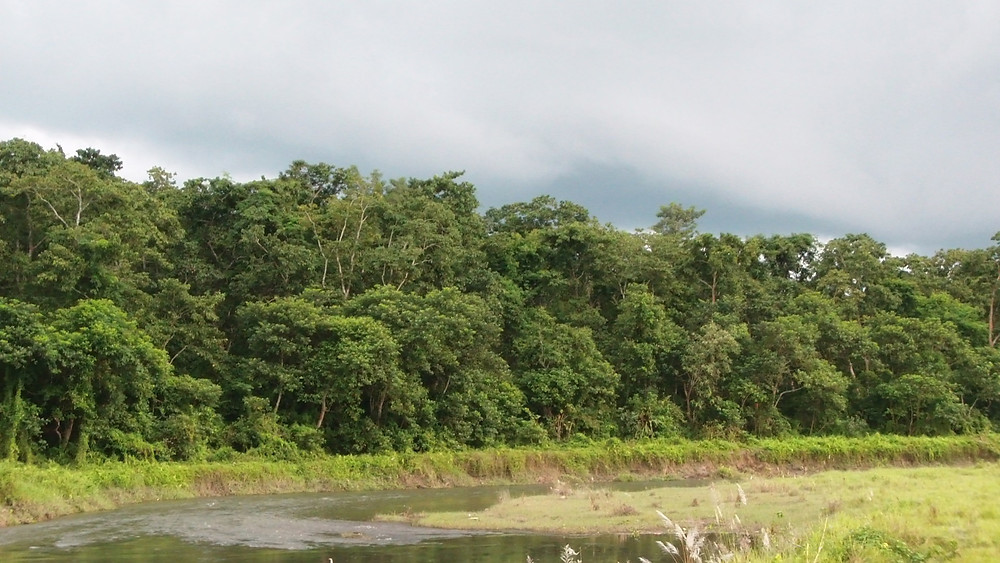 Chitwan Jungle and river