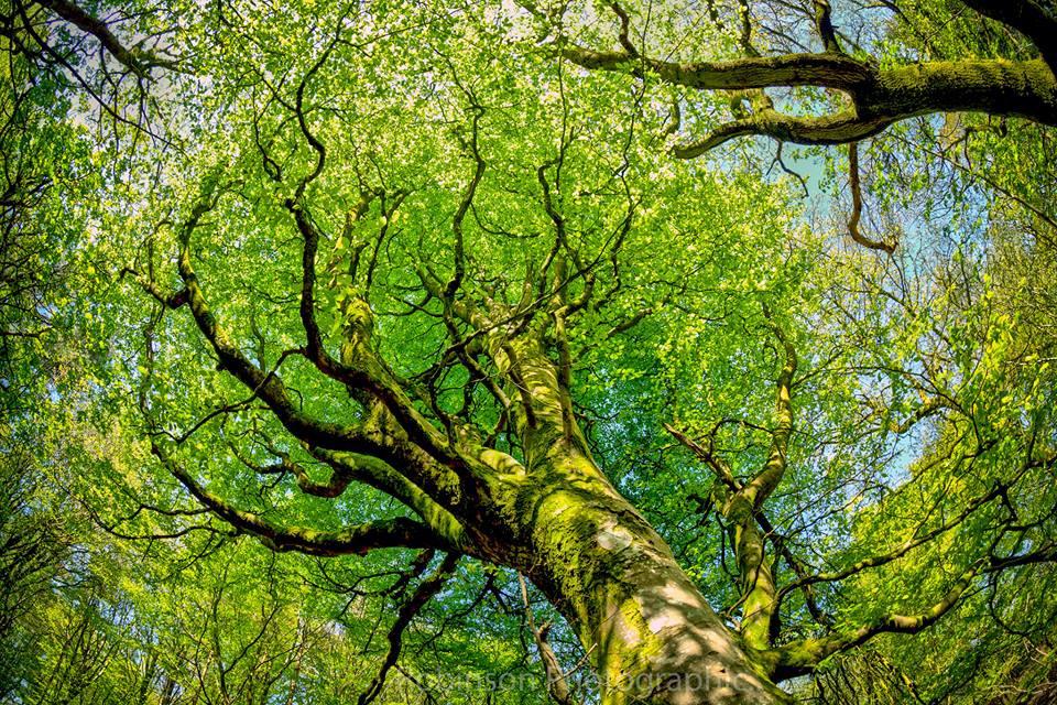 Tree Canopy by Colin Chilcott-Legg